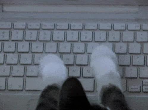 Enlace a Los gatos, esos usuarios avanzados