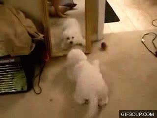 Enlace a Perro vs Espejo