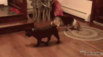 Enlace a Perro astuto