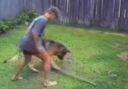 Enlace a El perro troll