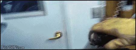 Enlace a Gato rescatado de una tubería