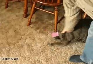 Enlace a Gato haciendo el moonwalk