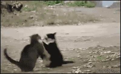 Enlace a El perro policía detiene la pelea