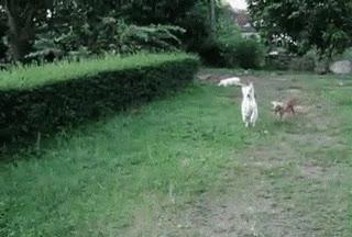 Enlace a Vaya perro más patoso