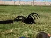 Enlace a ¿Creías que era una araña de verdad?
