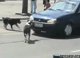 Enlace a No te metas con la banda de los perros