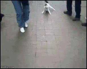 Enlace a Gato con un par