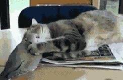 Enlace a Nunca despiertes a un gato de su siesta