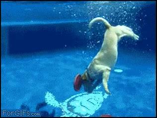 Enlace a Perro submarinista