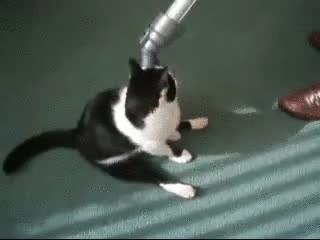 Enlace a Gatos que les gusta ser aspirados