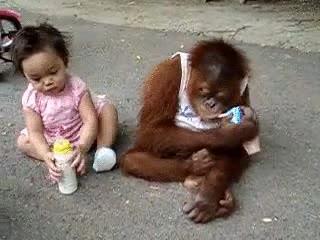 Enlace a Efectos de la crisis en los monos