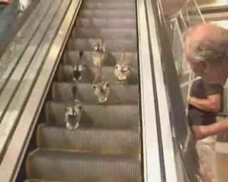 Enlace a Patos en las escaleras mecánicas