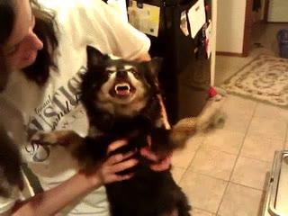 Enlace a Perro poseído