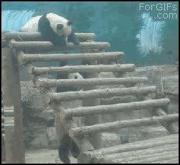 Enlace a Panda cabrón