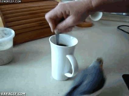 Enlace a Café café café café café café café