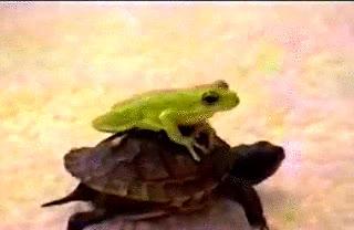 Enlace a La tortuga taxi