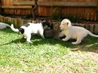 Enlace a Guepardo, perro y leones tan amigos