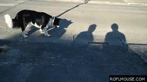 Enlace a ¡Coge la sombra si puedes!