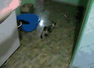Enlace a Spidercat