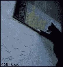 Enlace a Otro gato ninja, ¿cómo lo harán?