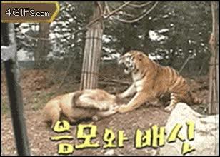 Enlace a Quién es el rey de la selva ahora