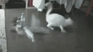 Enlace a Gato Paranoico