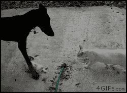 Enlace a ¡No te metas con mi gatito!