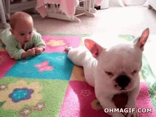 Enlace a El perro que enseña al bebé a gatear