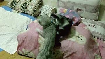 Enlace a El gato vampiro