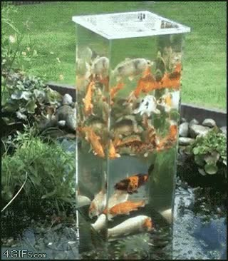 Enlace a Tanque de peces, ¡lo quieres!