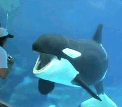 Enlace a Orca partiéndose