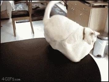Enlace a El gato de la bolsa