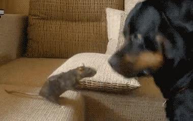 Enlace a Ratón asustando a perro