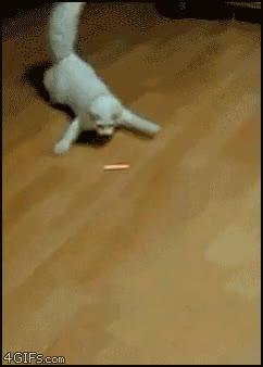Enlace a Sigue el láser, gatito