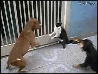 Enlace a El gato de Chuck Norris