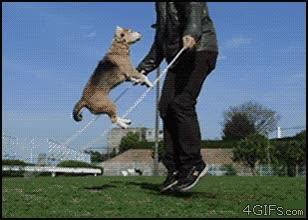 Enlace a Saltando a la comba con el perro