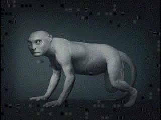 Enlace a Evolución humana