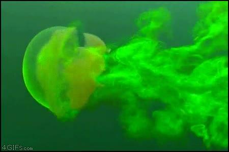 Enlace a Medusa fluorescente