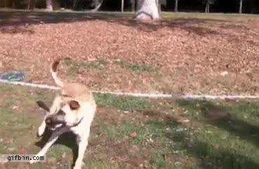 Enlace a Un perro muy motivado