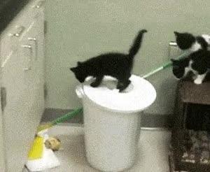 Enlace a Gatos cabrones