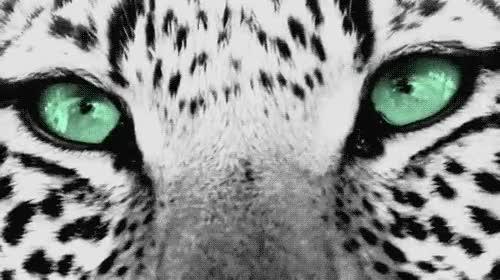 Enlace a Ojos de Puma