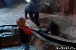 Enlace a Mamá gorila desaprueba la pelea