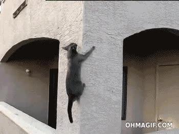 Enlace a Spidergato, spidergato...