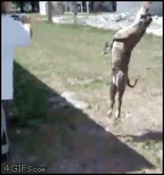 Enlace a Perro Backflip