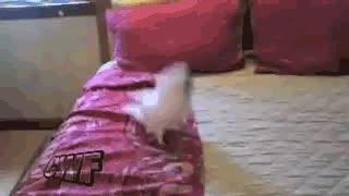 Enlace a Estrenando cama nueva