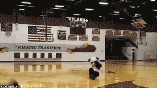 Enlace a Dulce sueños, señor panda