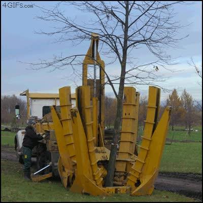 Enlace a Cómo arrancar un árbol