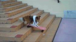 Enlace a Lassie se ha metido a skater