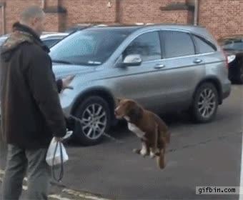 Enlace a El perro trapecista