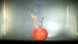 Enlace a Tomate en microondas